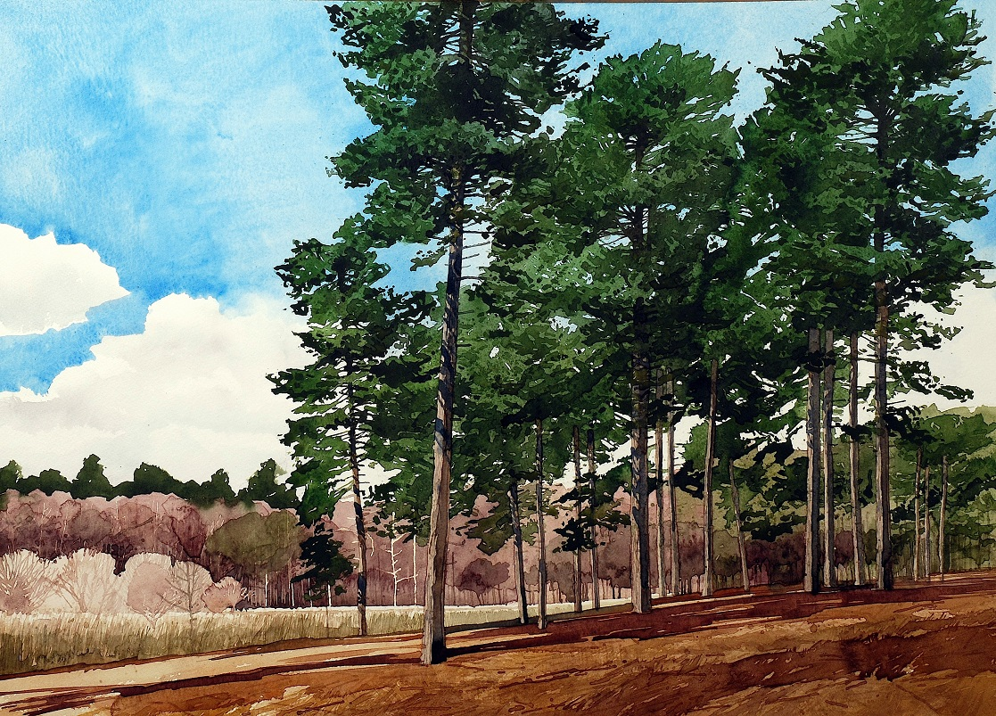 Scots Pine Esher copy
