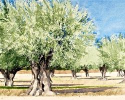 Ian Sidaway Studio Lourmarin Provence copy
